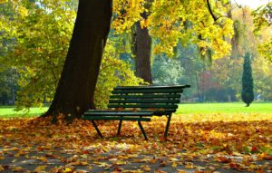 Park bench in the middle of a park underneath a tree in Autumn.